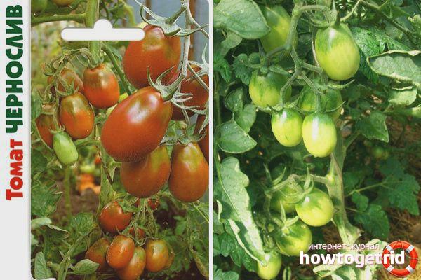 Ameixa de tomate
