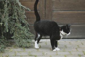 Quan els gats comencen a marcar territori