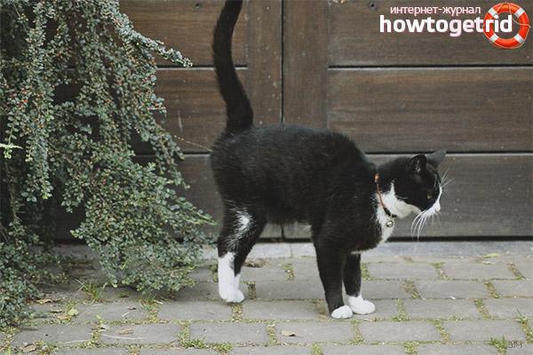 Когато котките започват да маркират територия