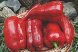 Pepper gave fra Moldova