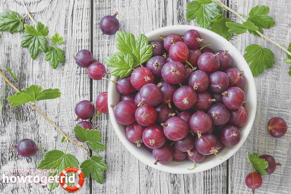 Сортове цариградско грозде